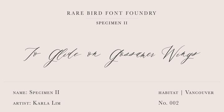 Rare Bird Specimen II